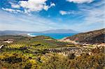Olive fields near the Mediterranean cost on Crete Stock Photo - Royalty-Free, Artist: frankix                       , Code: 400-04859938