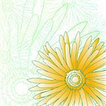 Vector illustration of green and yellow gerberas