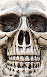 human skull closeup on halloween Stock Photo - Royalty-Free, Artist: endhals                       , Code: 400-04867343