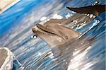 Close-up of happy dolphin playing in water