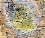 very special cracked old wood cut texture Stock Photo - Royalty-Free, Artist: mrVitkin                      , Code: 400-04872693