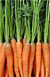 Photo of a bunch of carrots as a background. Stock Photo - Royalty-Free, Artist: sumners                       , Code: 400-04872806