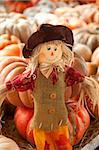 A thanksgiving doll or scarecrow in a fall setting of pumpkins with the horizontal format. Stock Photo - Royalty-Free, Artist: mkm3                          , Code: 400-04877460