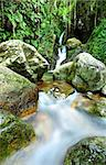 stream in jungle Stock Photo - Royalty-Free, Artist: leungchopan                   , Code: 400-04888764