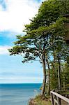 trees at high hill on seashore Stock Photo - Royalty-Free, Artist: tarczas                       , Code: 400-04895537