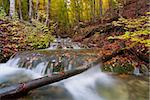 landscape with mountain river in autumn forest Stock Photo - Royalty-Free, Artist: pasha66                       , Code: 400-04898321