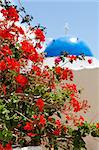 Beautiful red geranium flowers with blue dome of church in background in Thira, Santorini, Greece