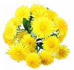 Bouquet of yellow flowers of dandelion isolated on white background. Close-up. Studio photography. Stock Photo - Royalty-Free, Artist: boroda                        , Code: 400-04899999