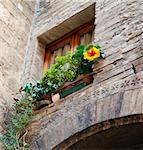 Architectual details  window with flower - Tuscany - Italy Stock Photo - Royalty-Free, Artist: lindom                        , Code: 400-04904218