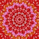 Red mandala with butterflies and flowers Stock Photo - Royalty-Free, Artist: agcuesta                      , Code: 400-04904239