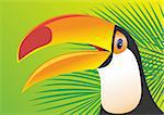 Keel Billed Toucan Stock Photo - Royalty-Free, Artist: 25081972                      , Code: 400-04908799