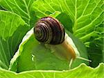 snail crawling on green leave Stock Photo - Royalty-Free, Artist: A7880S                        , Code: 400-04914165