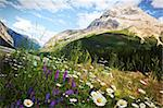 Field of daisies and wild flowers with Rocky Mountains in background Stock Photo - Royalty-Free, Artist: Sandralise                    , Code: 400-04916649