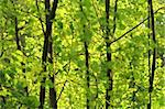close-up view of fresh green leaves and young trees Stock Photo - Royalty-Free, Artist: rpstudio                      , Code: 400-04916982