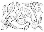 hand drawn leaves isolated on the white background Stock Photo - Royalty-Free, Artist: jonnysek                      , Code: 400-04917353