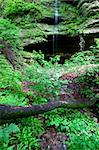 Lush vegetation grows near a small waterfall at Starved Rock State Park. Stock Photo - Royalty-Free, Artist: Wirepec                       , Code: 400-04924392