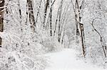 Fresh snowfall along a hiking trail in northern Illinois. Stock Photo - Royalty-Free, Artist: Wirepec                       , Code: 400-04925094