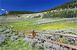 Beautiful wildflowers along a rustic fenceline in the Bighorn National Forest of Wyoming. Stock Photo - Royalty-Free, Artist: Wirepec                       , Code: 400-04925103