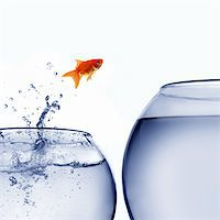 goldfish jumping out of the water Stock Photo - Royalty-Freenull, Code: 400-04925405
