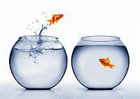goldfish jumping out of the water Stock Photo - Royalty-Freenull, Code: 400-04925407