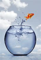 goldfish jumping out of the water Stock Photo - Royalty-Freenull, Code: 400-04925409
