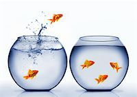 goldfish jumping out of the water Stock Photo - Royalty-Freenull, Code: 400-04926221