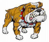 A cartoon very hard looking bulldog character. Stock Photo - Royalty-Freenull, Code: 400-04926269