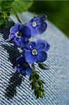 Small dark blue flowers on a jeans fabric. with use of a macro-ring Stock Photo - Royalty-Free, Artist: Friday                        , Code: 400-04953294