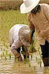 Ricefarmers at work in rice field Stock Photo - Royalty-Free, Artist: wagner_christian              , Code: 400-04974056