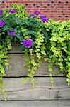 Vine decoration (Lysimachia Creeping Gold Jenny and Verbena Homestead) Stock Photo - Royalty-Free, Artist: hosony                        , Code: 400-04979876