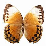 beautiful macro butterfly fly insect Stock Photo - Royalty-Free, Artist: yellowj                       , Code: 400-04983404