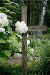 bush of white flowers and cross in cemetary Stock Photo - Royalty-Free, Artist: Bananna                       , Code: 400-04983746
