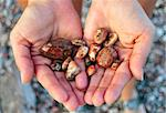 A Small Cache of Lake Superior Agates Discovered Near Presque Isle Park In Marquette Michigan Stock Photo - Royalty-Free, Artist: RayAnthony                    , Code: 400-04985137