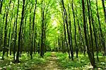 a path is in the green forest Stock Photo - Royalty-Free, Artist: Pakhnyushchyy                 , Code: 400-04990397