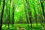 a path is in the green forest Stock Photo - Royalty-Free, Artist: Pakhnyushchyy                 , Code: 400-04990549