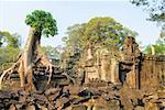 Tree at Preah Khan temple, Angkor, Cambodia