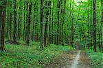 path is in the green forest Stock Photo - Royalty-Free, Artist: Pakhnyushchyy                 , Code: 400-04999965
