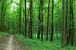 path is in the green forest Stock Photo - Royalty-Free, Artist: Pakhnyushchyy                 , Code: 400-05000655
