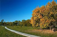 autumn in the park: yellow leaved trees and path Stock Photo - Royalty-Freenull, Code: 400-05010917