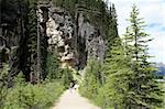 Hiking trail near Lake Louise, Banff National Park, Alberta, Canada