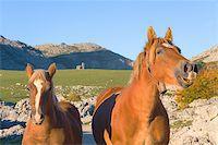 Horses in Mount Lakes Covadonga, Asturias, Spain Stock Photo - Royalty-Freenull, Code: 400-05018544