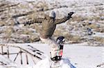 Men jumping on a snowboard Stock Photo - Royalty-Free, Artist: pauloresende                  , Code: 400-05025245