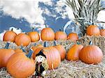Cute scarecrow in the middle of autumn pumpkins. Stock Photo - Royalty-Free, Artist: 14ktgold                      , Code: 400-05025265