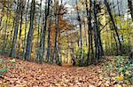 path in beautiful fall forest Stock Photo - Royalty-Free, Artist: kmit                          , Code: 400-05032297