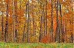 Fall in forest Stock Photo - Royalty-Free, Artist: phodopus                      , Code: 400-05044924
