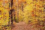 Fall in forest Stock Photo - Royalty-Free, Artist: phodopus                      , Code: 400-05045345