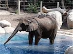 A large elephant standing in water Stock Photo - Royalty-Free, Artist: Builttospill                  , Code: 400-05047855