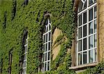 Windows of a library with a creeping leaves of wild wine  Stock Photo - Royalty-Free, Artist: Fyletto                       , Code: 400-05048538