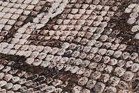 snake skin - Detail of a real skin of a snake with scales pattern Stock Photo - Royalty-Freenull, Code: 400-05057155