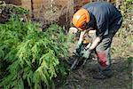 tree worker cutting conifers with a chainsaw Stock Photo - Royalty-Free, Artist: nelsonart                     , Code: 400-05057268